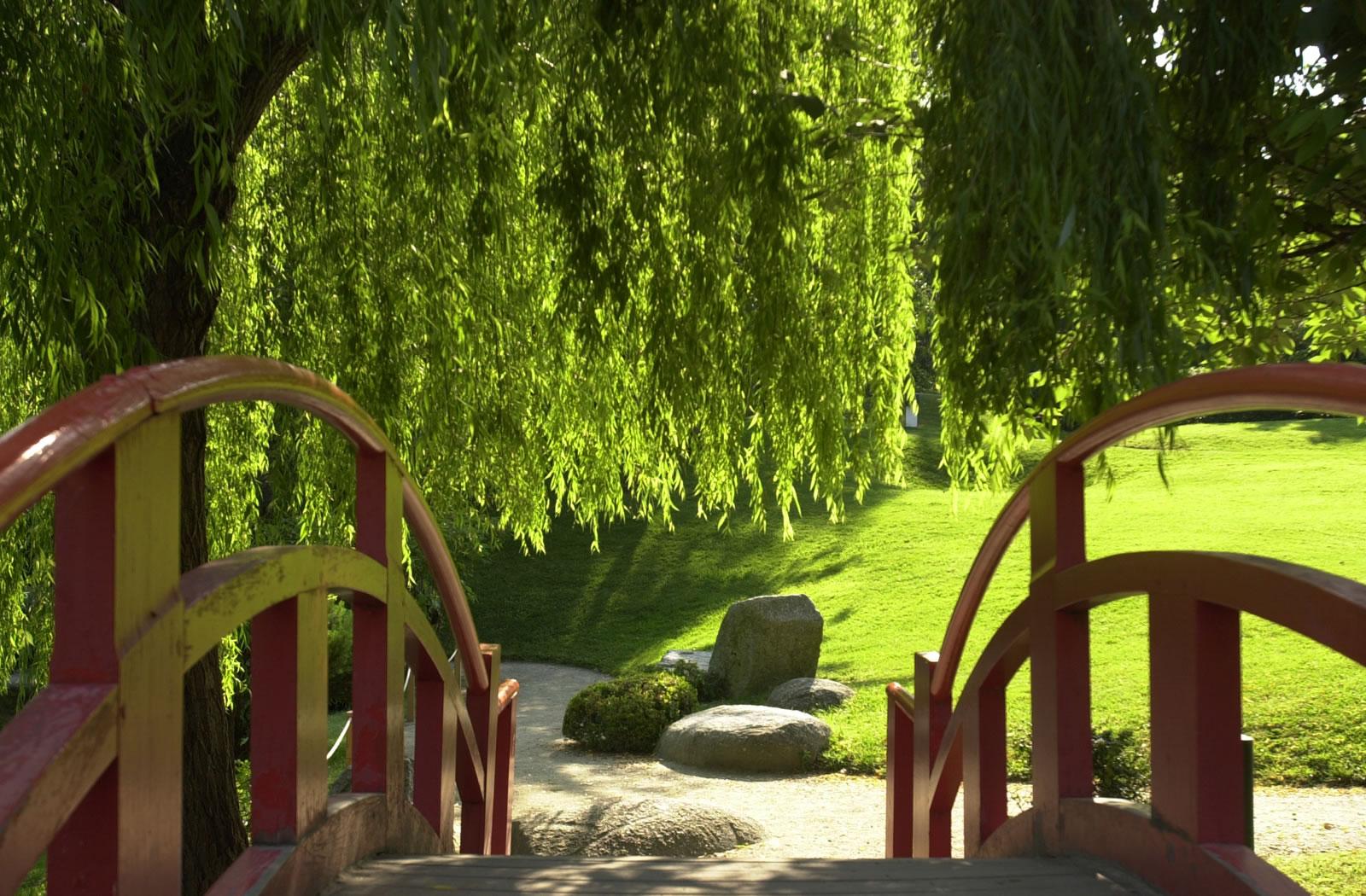 Salon De Jardin Asiatique 10 plantes incontournables dans un jardin japonais