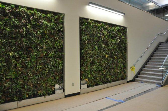 15 - murs végétaux